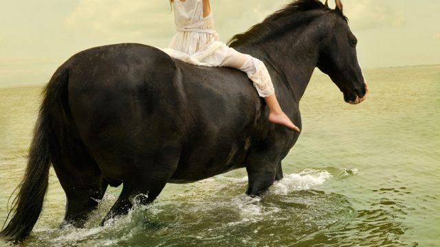 https://www.dodho.com/wp-content/uploads/2013/07/Marwari-Stallion-1-640x360.jpg