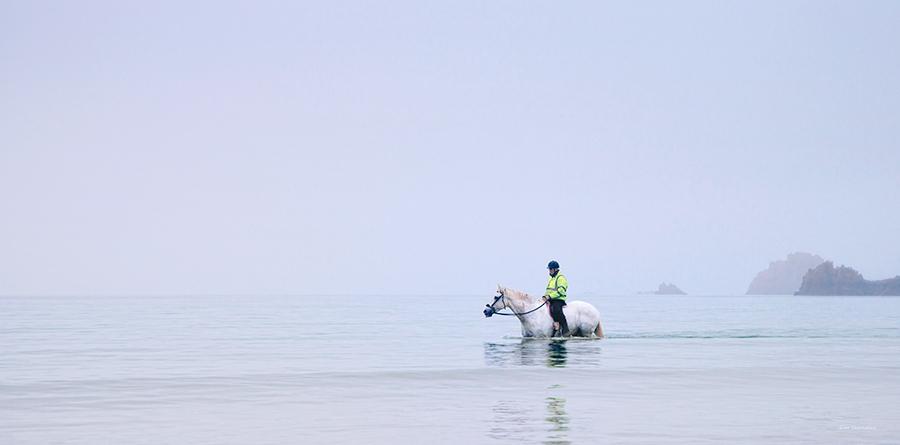 13 Sea Horse St. Brelade's Bay Jersey gina socrates