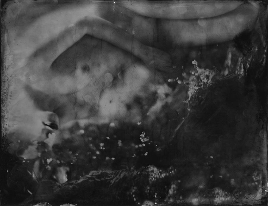 25_Renata_Vogl_scanned original ferrotypie,nymph, original size 13x10 cm