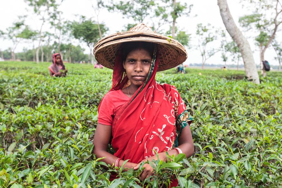 Portrait of a woman (tea laborer), tea estates around Sreemangal (Srimangal), Division of Sylhet, Bangladesh, Indian Sub-Continent, Asia