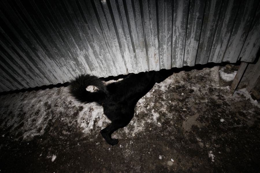 Black_Ice_S.Danes_Dodho_011