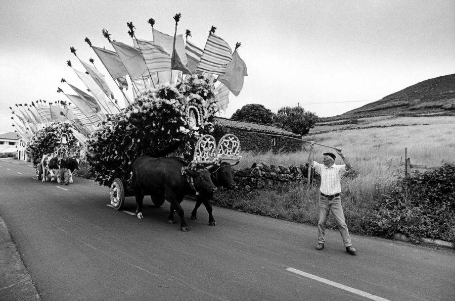 Rosais, domingo da Trindade, 2004. Desfile dos carros.