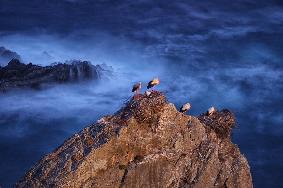 STORKS IN THE CAPE SARDAO IN PORTUGAL 00002