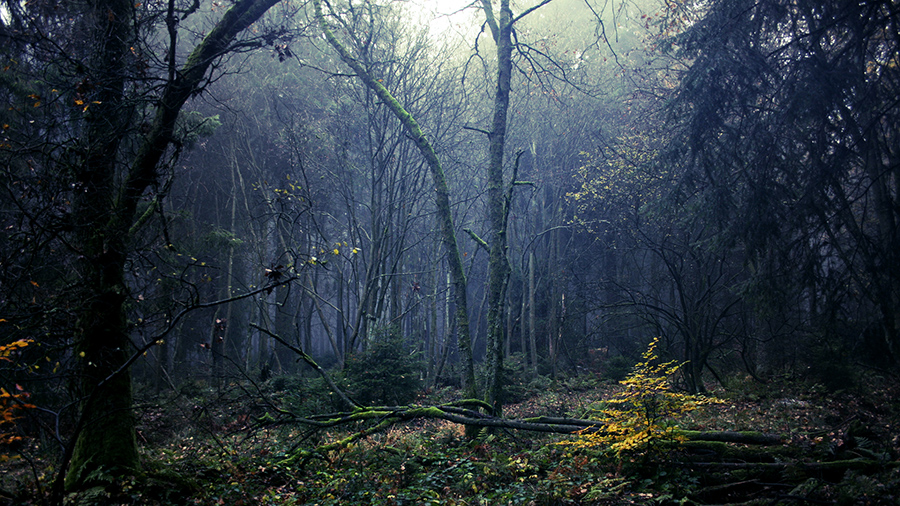 UNTITLED FOREST