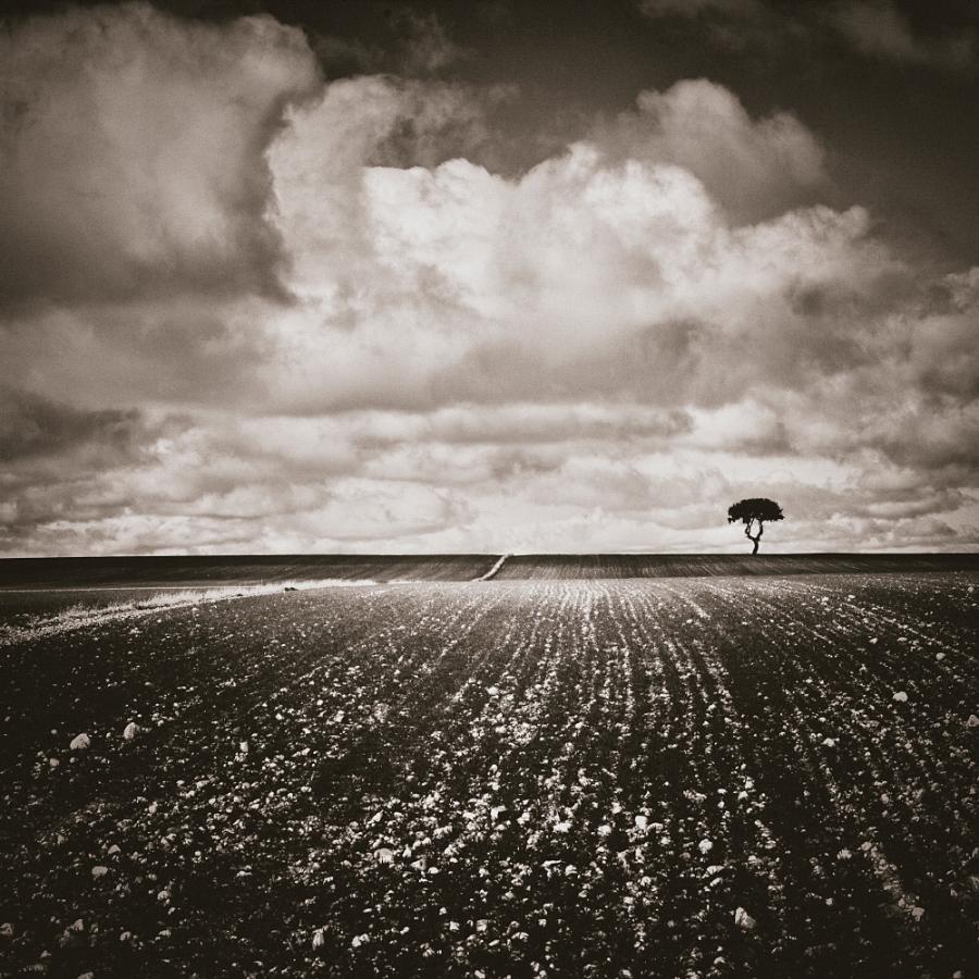 0176 - Tiny Tree in the Horizon