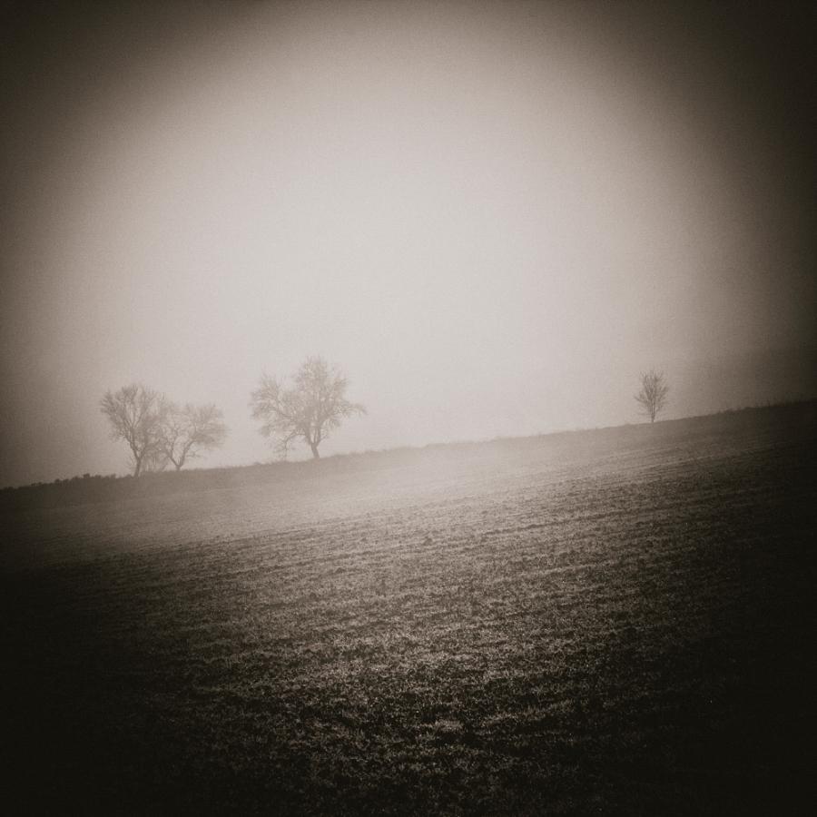 0181 - Amandes das le Brouillard