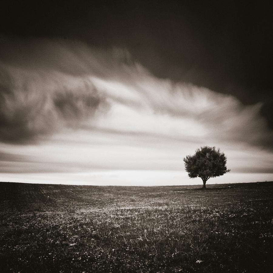 0193 - Spring Wind