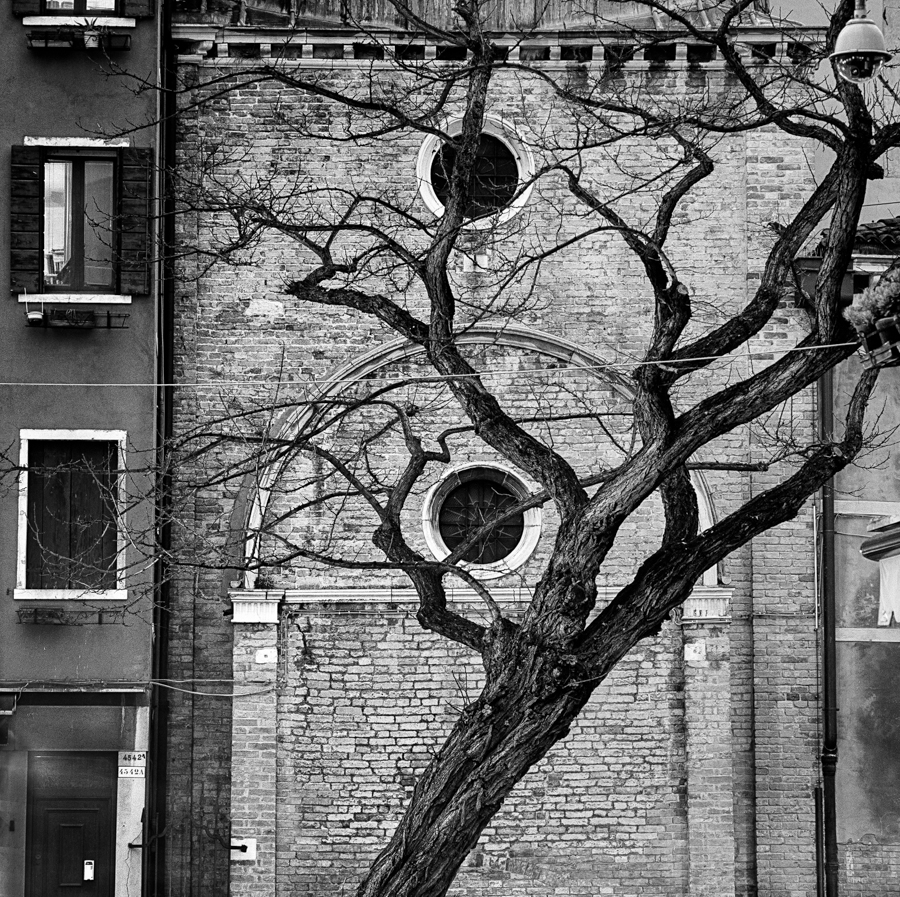 City tree_IT_VEN_019_D_bis_b