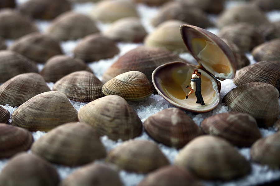 clamshell lovers 900px by Christopher Boffoli