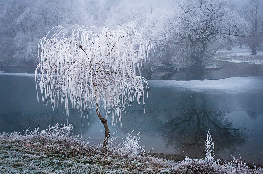 frost-9
