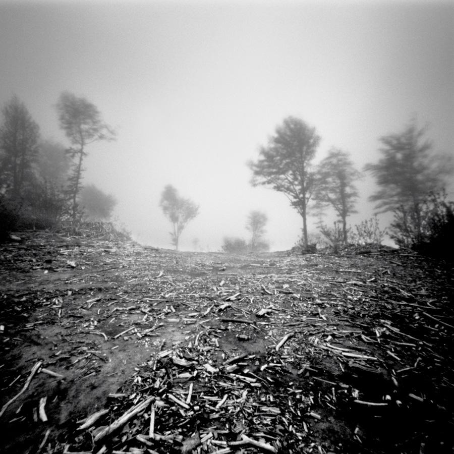 Pinhole_Trees_16