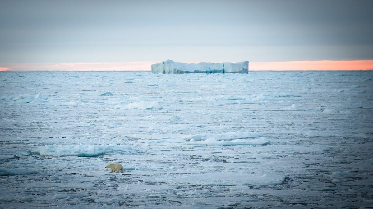 Arctic 6