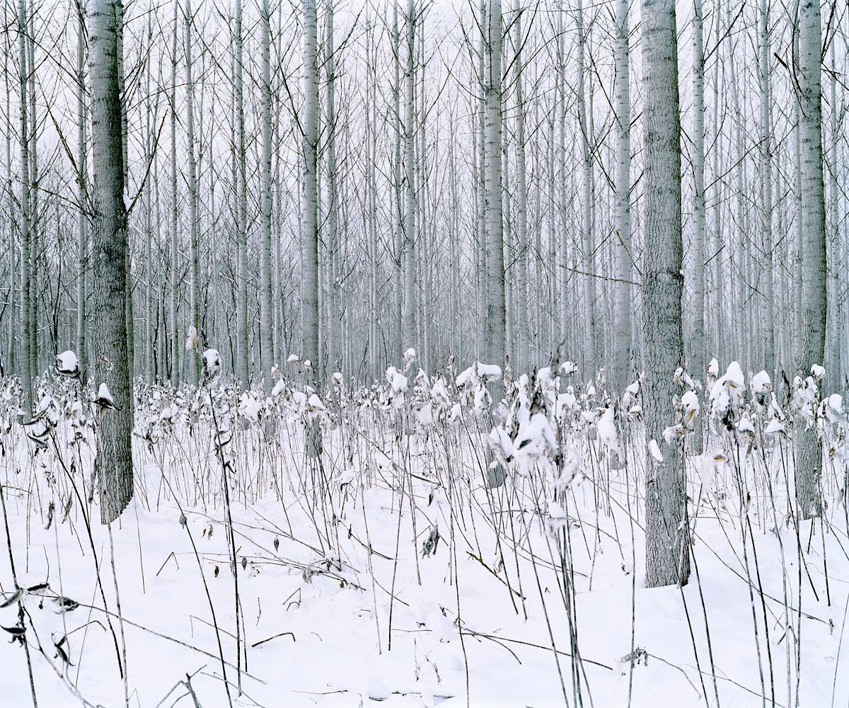 Frozen Flowers. Csevharaszt, Hungary 2012.