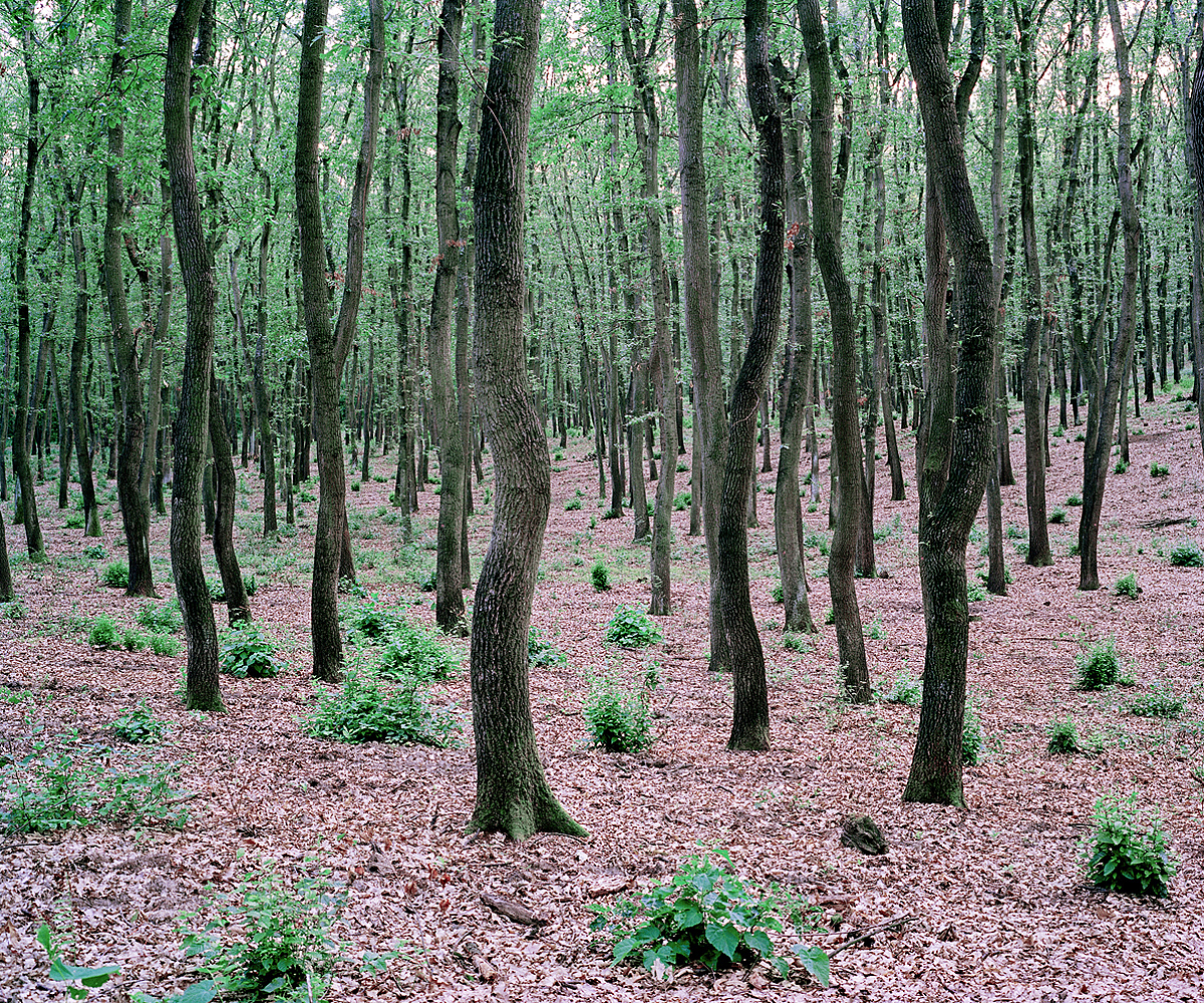Green Bushes. Near Lake Balaton, Hungary 2012.