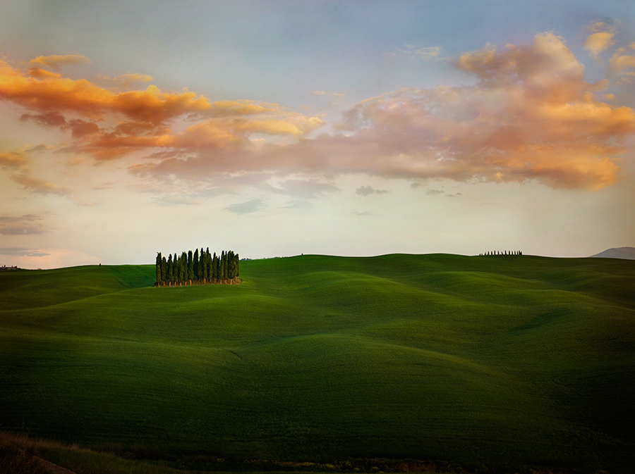 Cypress Grove II, Val d'Orcia, Tuscany