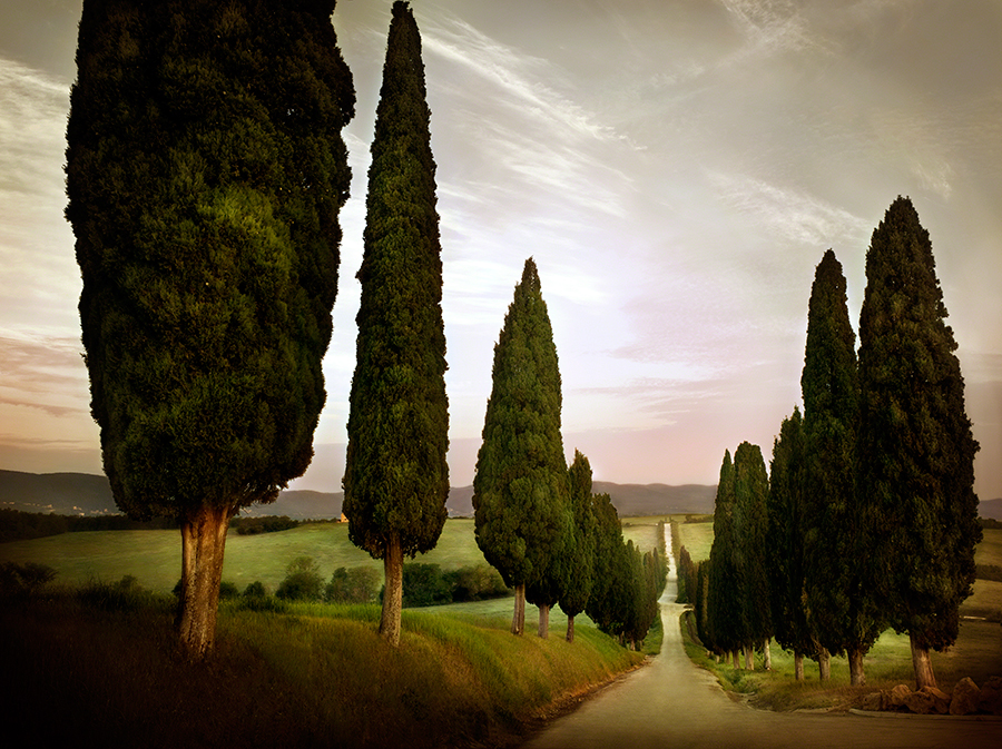 Cypress Lined Road, Siena, Tuscany