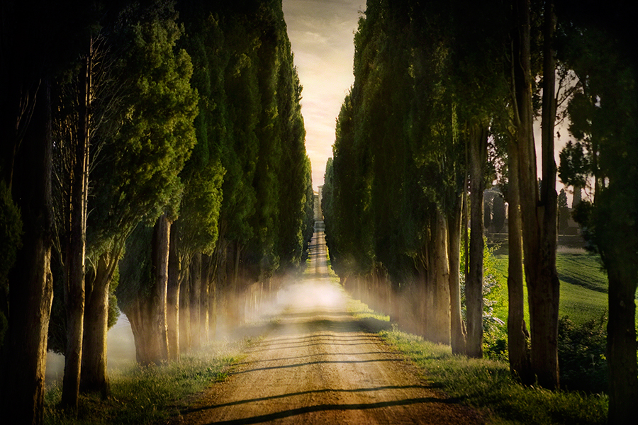 Cypress Lined Road II, Siena, Tuscany