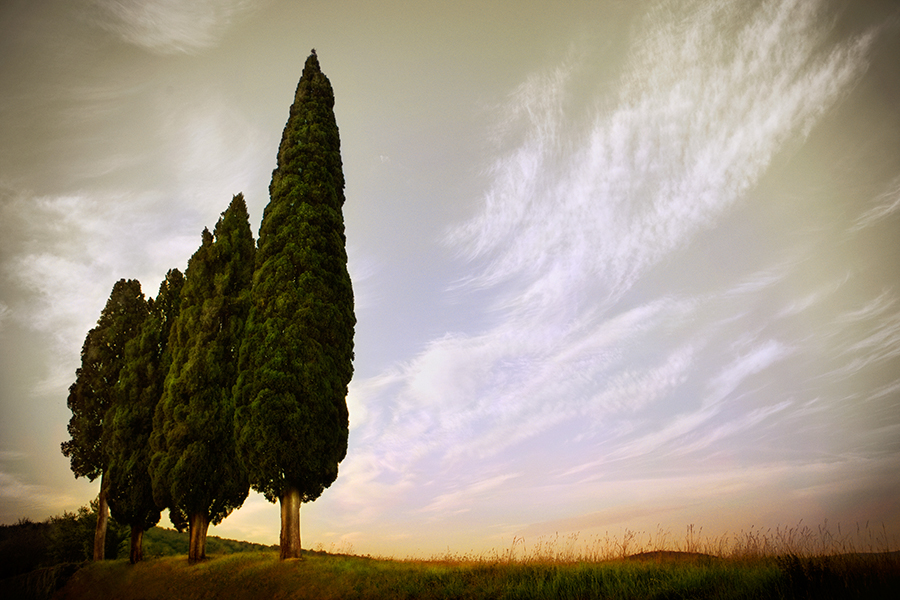 Four Cypresses, Tuscany