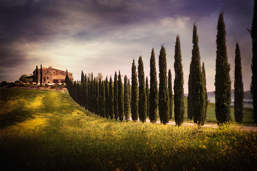 Villa and Cypress Trees, Tuscany