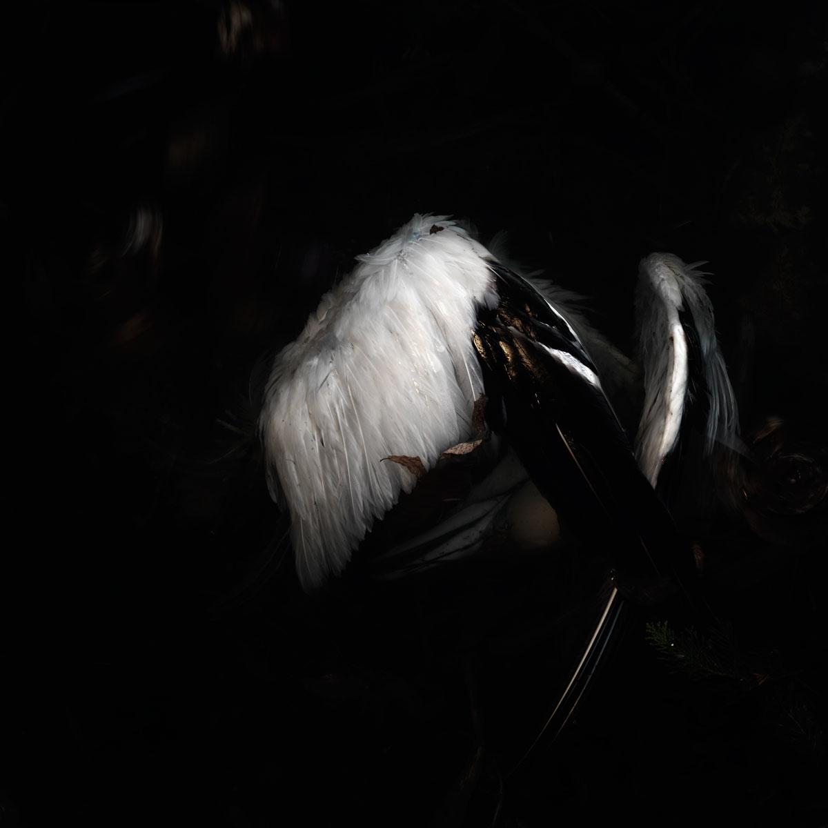 Bird no 21