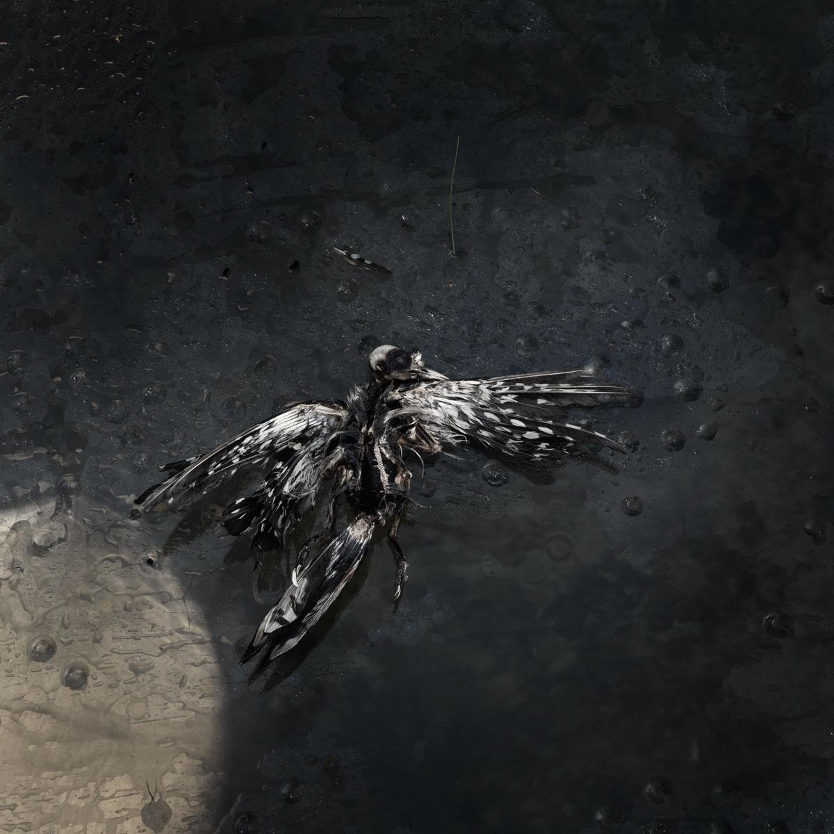 Bird no 23