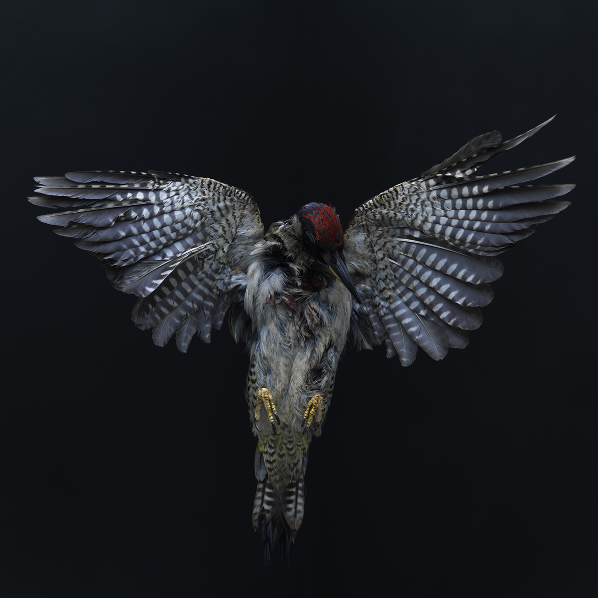 Bird no 3