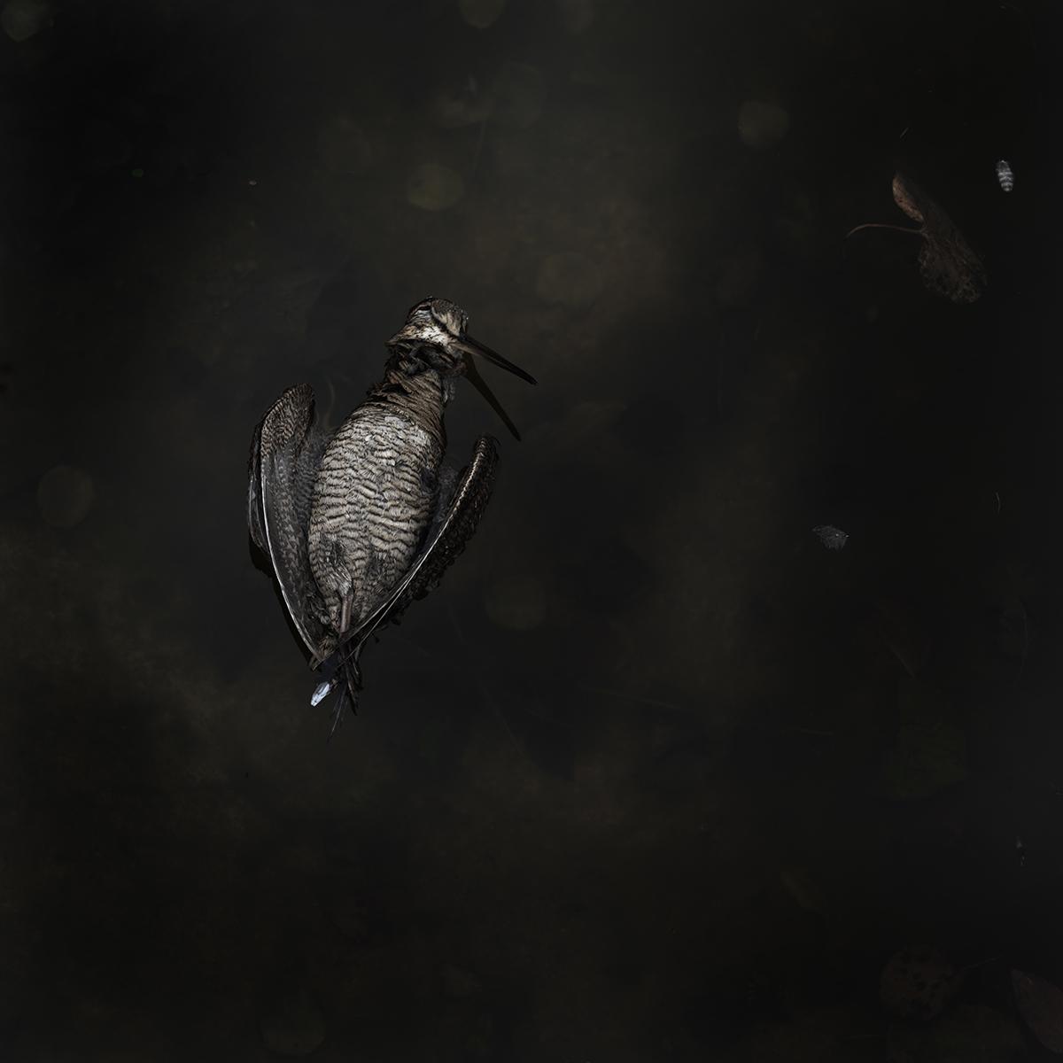 Bird no 5