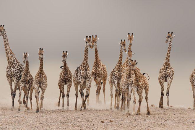 Africa Through my lens by Frederick van Heerden