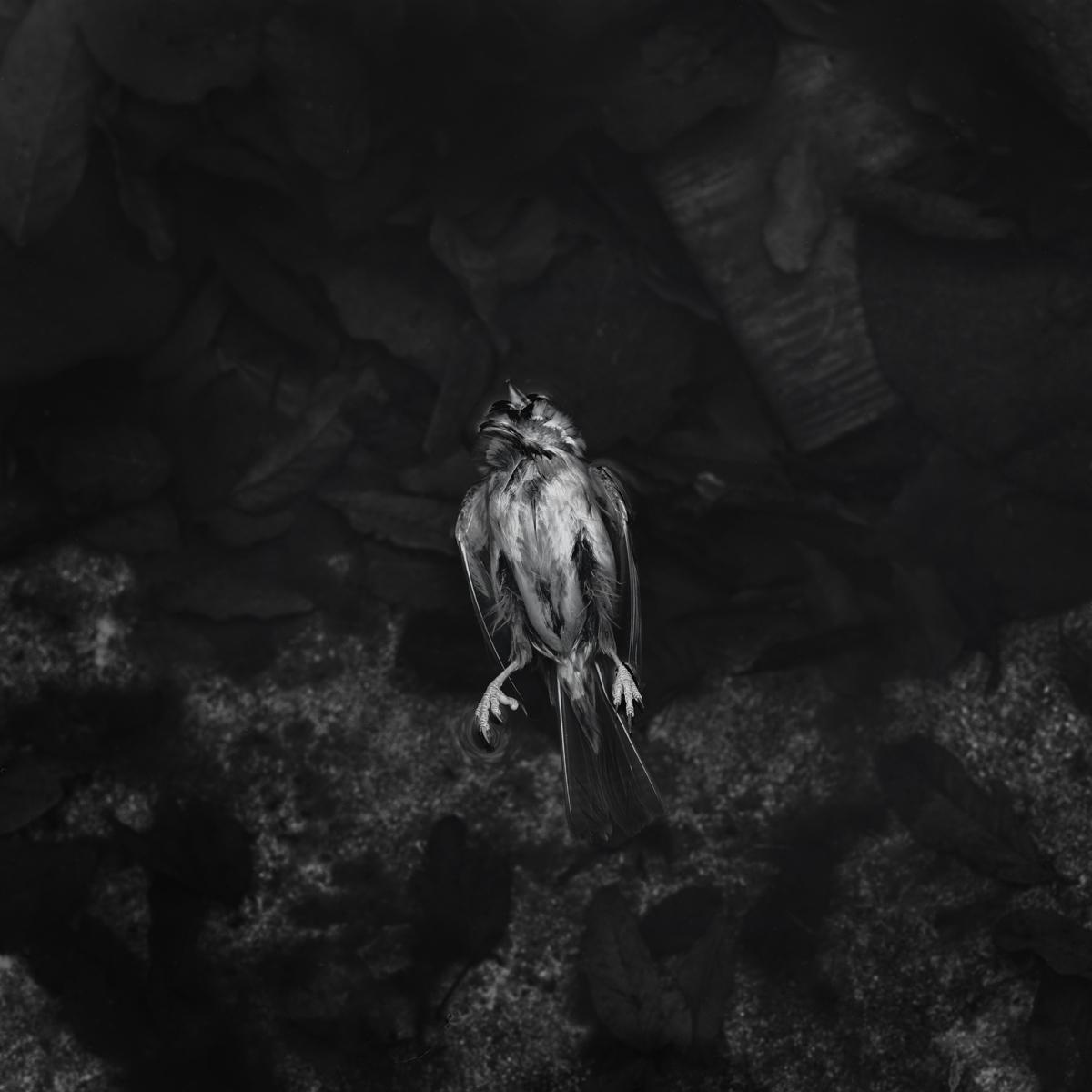Sparrow no 3