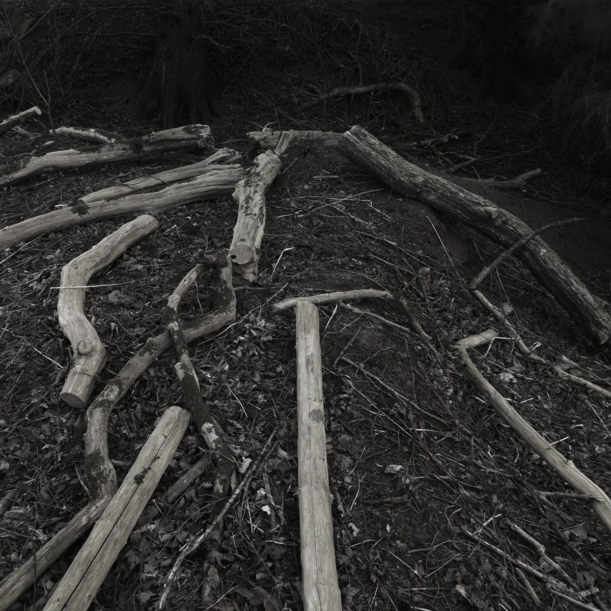 Wood no 1