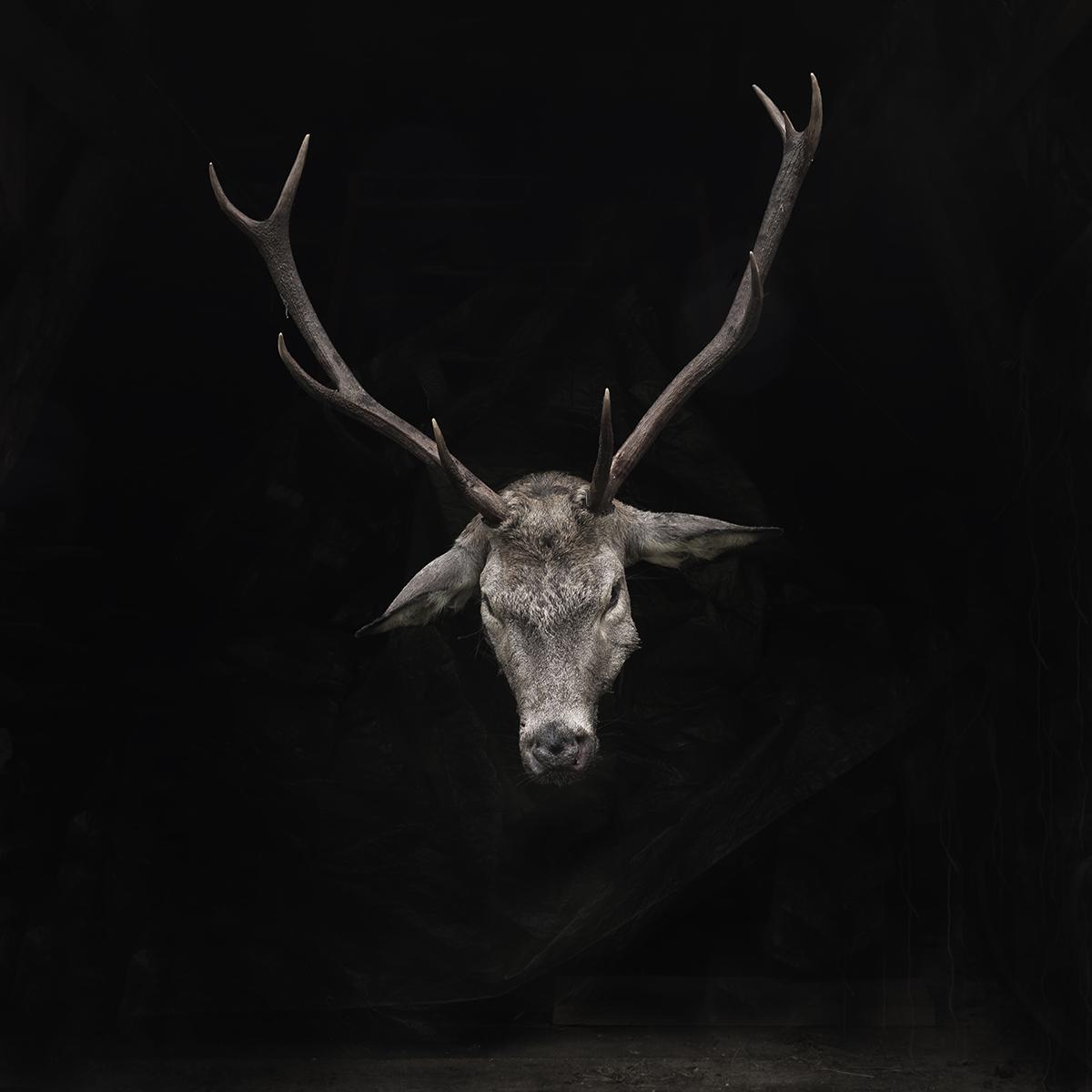 deer no2