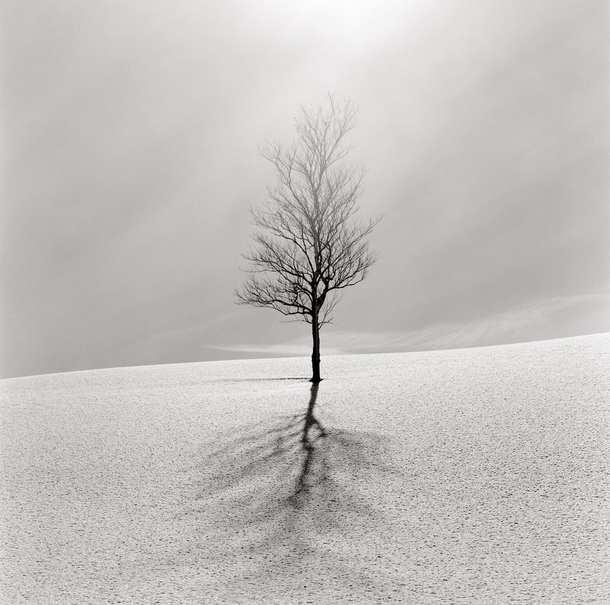 Snowy landscape by Tomoharu Ota