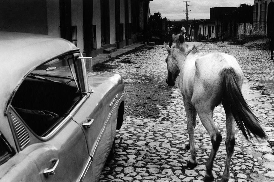 trinidad_horse