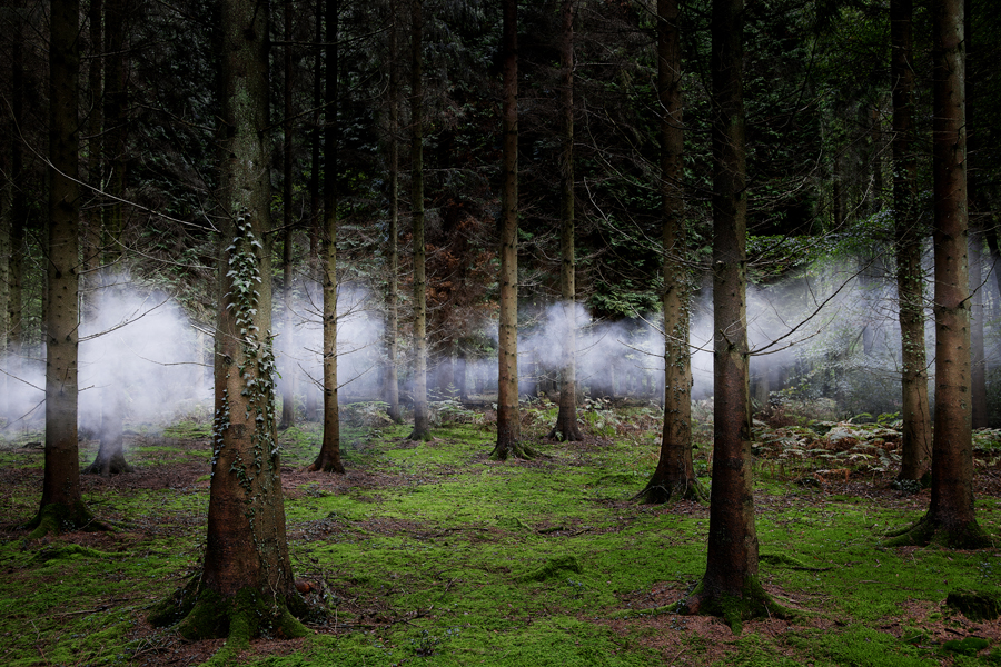 Between the Trees 1, 2014 British photographers / Ellie Davies