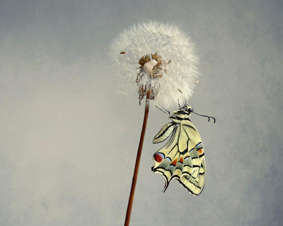 Butterflies by Belén Argüeso