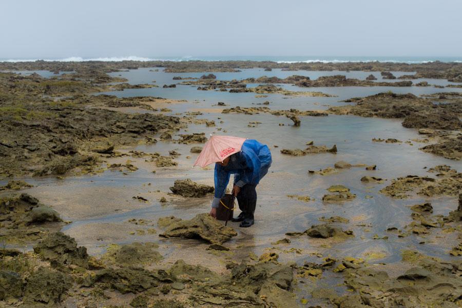 kathrynthompson(shellfishing)