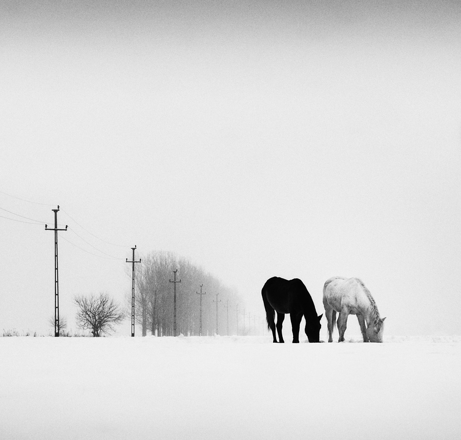 Winterly Haiku by Andrei Baciu