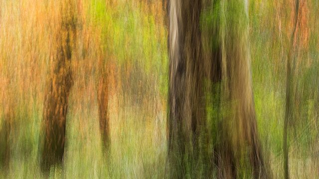 https://www.dodho.com/wp-content/uploads/2014/11/Autumn-Glade-640x360.jpg