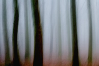 Winter-Mist