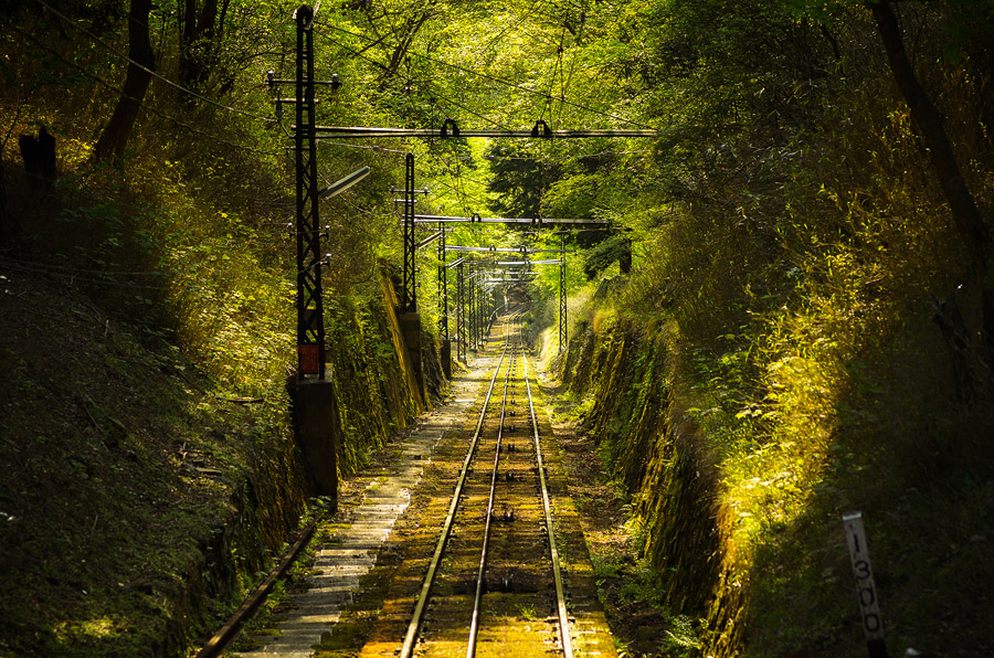 14 Railway into the forest