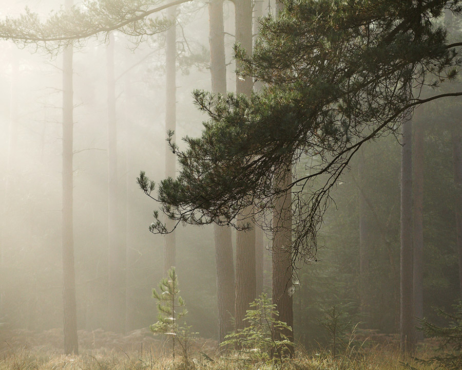Early Forest II