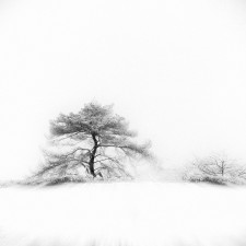 Gittan_Beheydt_Winter Tree