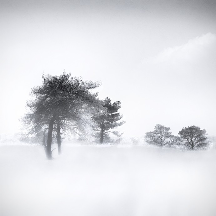 Gittan_Beheydt_Winter Trees I