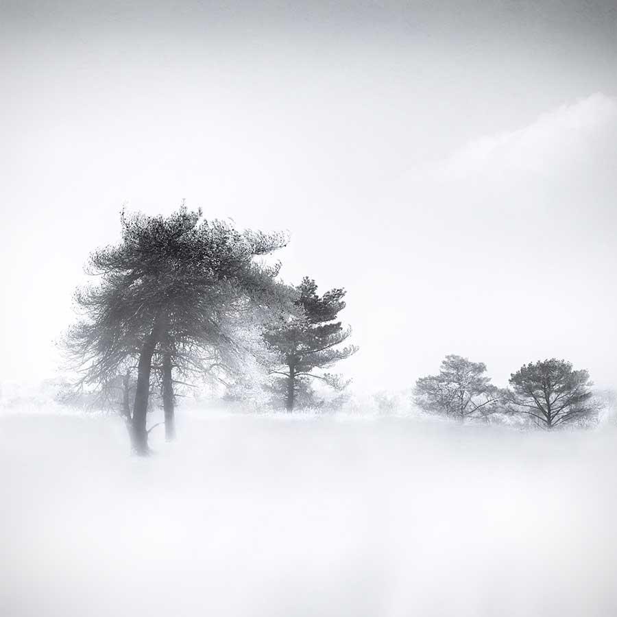 Gittan_Beheydt_Winter Trees I