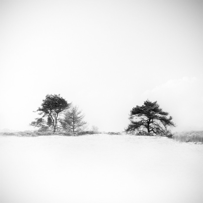 Gittan_Beheydt_Winter Trees II