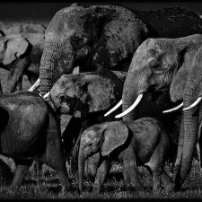 Laurent Baheux - Elephants family, Kenya, 2007 - 900 x 450 - 72 dpi