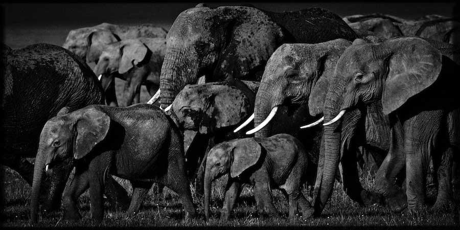 Laurent Baheux - Elephants family, Kenya, 2007 - 900 x 450 - 72 dpi