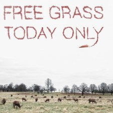 Free grass_JP- James Popsys : Creative Photography