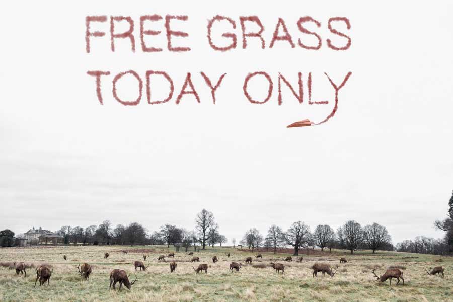 Free grass_JP- James Popsys : Creative Photography