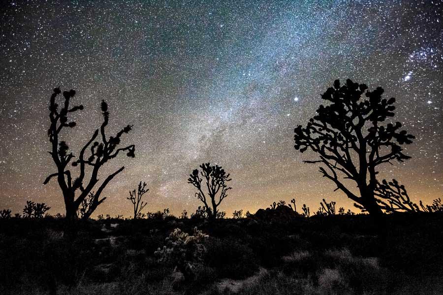 Night photography / Tom Lowe Joshua_Forest_Milky_Way